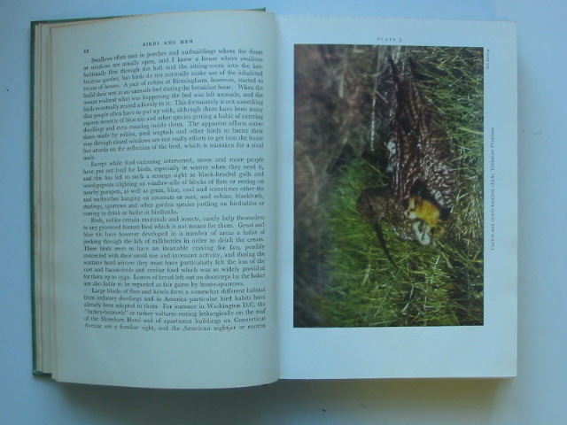 Photo of BIRDS AND MEN (NN 17) written by Nicholson, E.M. published by Collins (STOCK CODE: 1202469)  for sale by Stella & Rose's Books