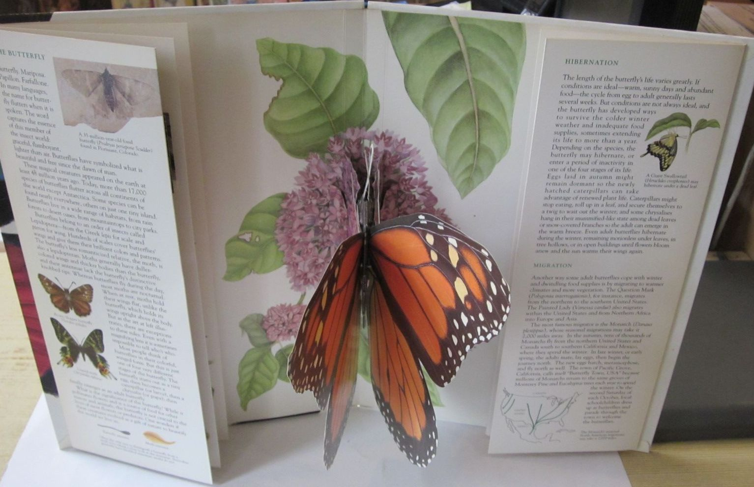 Photo of THE BUTTERFLY written by Mudd, Maria M. illustrated by Smith-Griswold, Wendy published by Stewart Tabori & Chang (STOCK CODE: 1401124)  for sale by Stella & Rose's Books