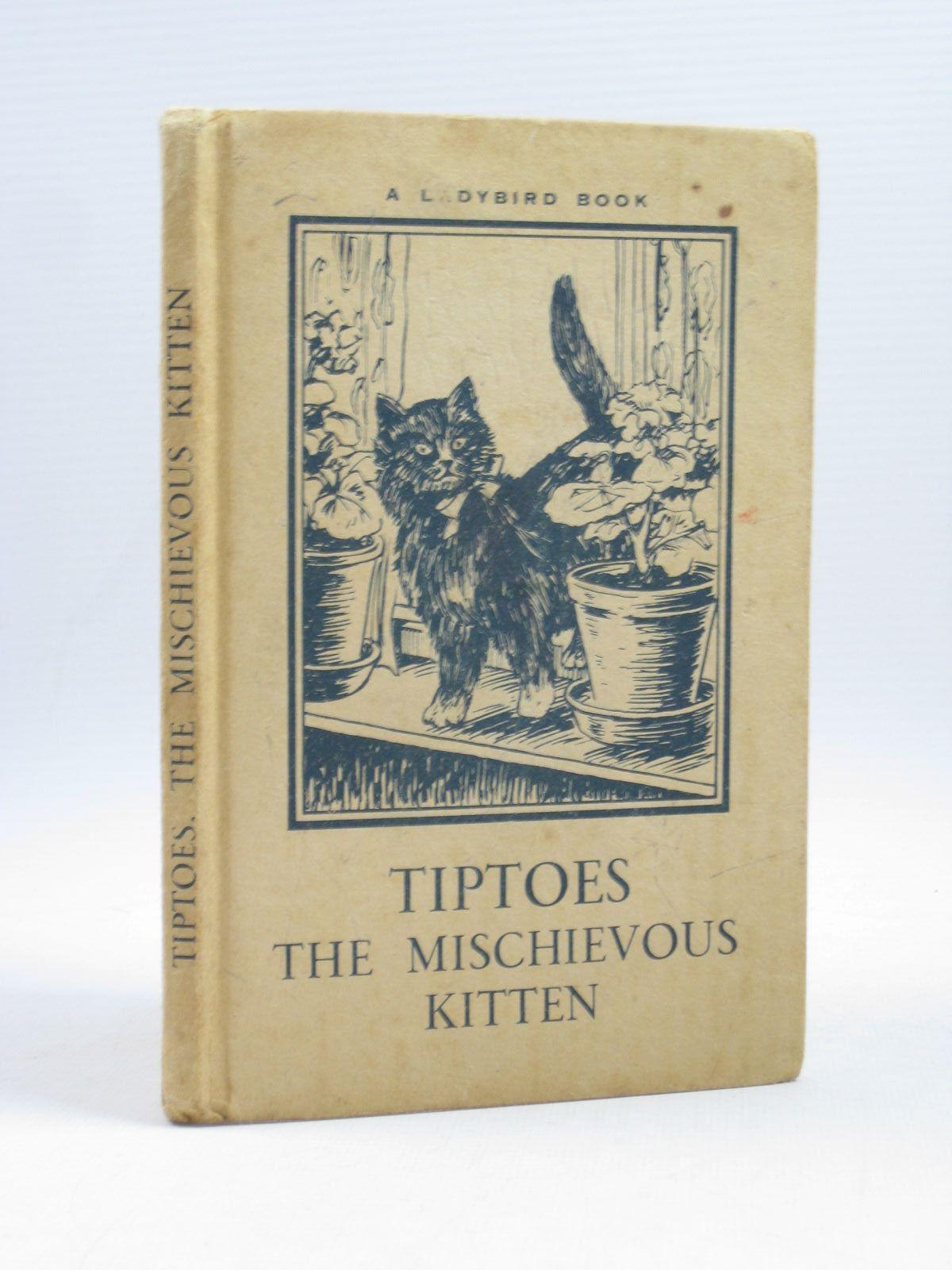 Photo of TIPTOES THE MISCHIEVOUS KITTEN