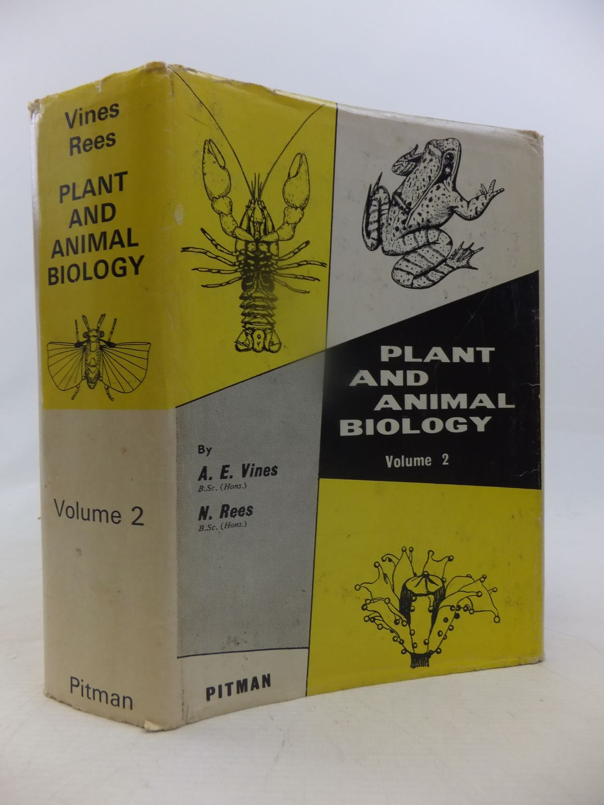 Photo of PLANT AND ANIMAL BIOLOGY VOLUME II written by Vines, A.E.<br />Rees, N. published by Sir Isaac Pitman & Sons Ltd. (STOCK CODE: 1809444)  for sale by Stella & Rose's Books