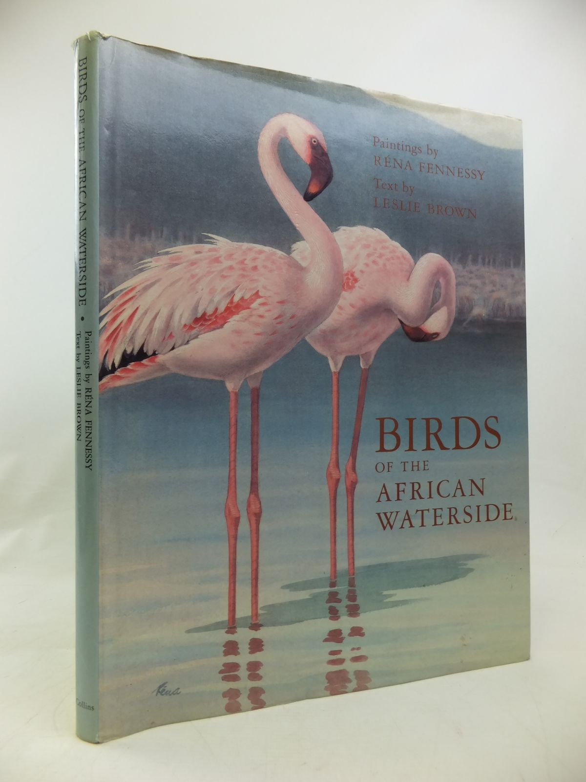Photo of BIRDS OF THE AFRICAN WATERSIDE