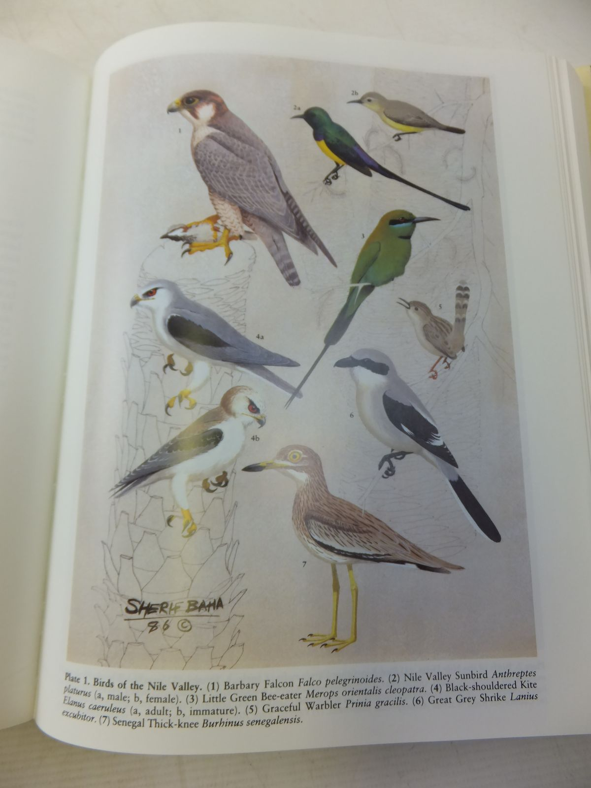 Photo of THE BIRDS OF EGYPT written by Goodman, Steven M.<br />Meininger, Peter L.<br />et al,  illustrated by El Din, Sherif M. Baha<br />et al.,  published by Oxford University Press (STOCK CODE: 1811078)  for sale by Stella & Rose's Books