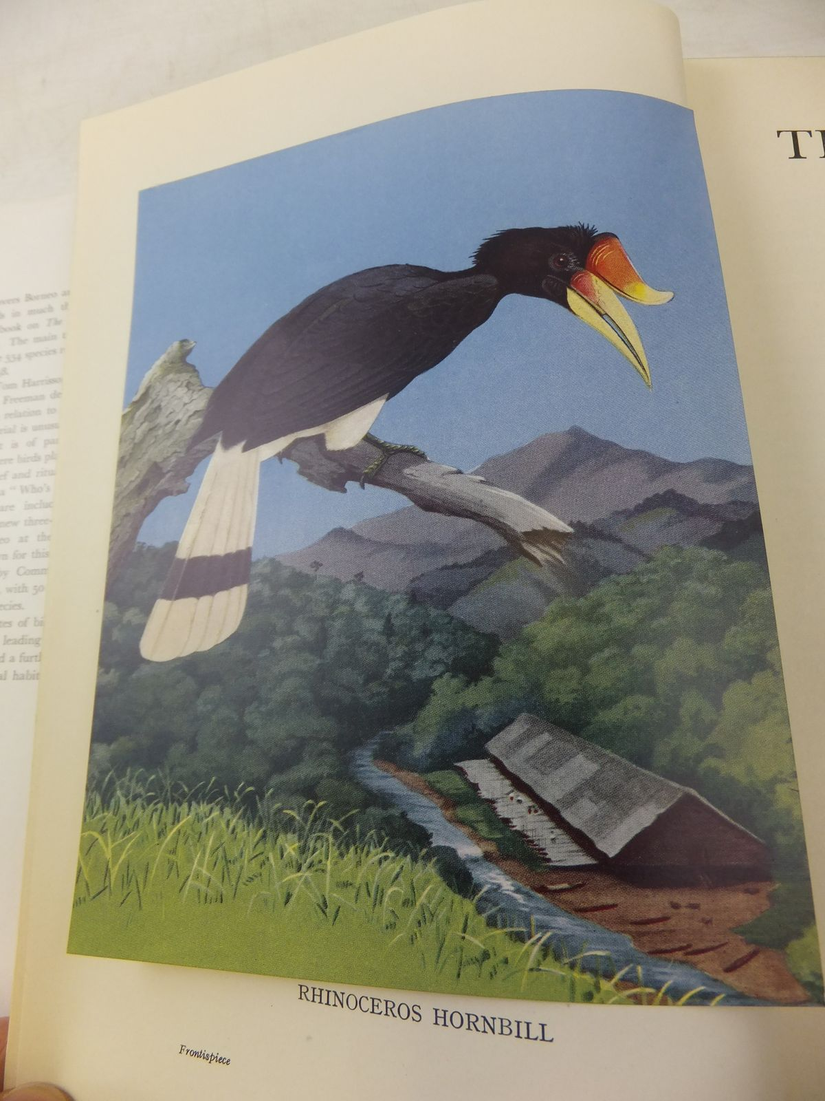 Photo of THE BIRDS OF BORNEO written by Smythies, Bertram E. illustrated by Hughes, A.M. published by Oliver & Boyd (STOCK CODE: 1811087)  for sale by Stella & Rose's Books