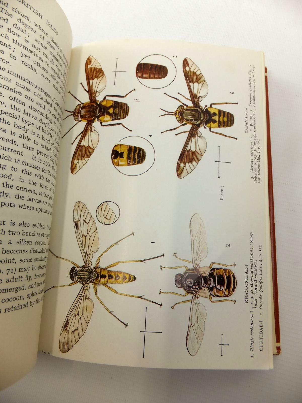 Photo of FLIES OF THE BRITISH ISLES written by Colyer, Charles N.<br />Hammond, Cyril O. published by Frederick Warne & Co Ltd. (STOCK CODE: 1812744)  for sale by Stella & Rose's Books