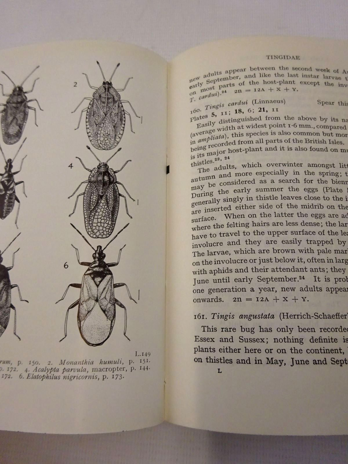 Photo of LAND AND WATER BUGS OF THE BRITISH ISLES written by Southwood, T.R.E.<br />Leston, Dennis illustrated by Swain, H.D.<br />Entwistle, P.<br />Entwishle, H.M.<br />Southwood, T.R.E.<br />Leston, Dennis published by Frederick Warne & Co Ltd. (STOCK CODE: 1815854)  for sale by Stella & Rose's Books