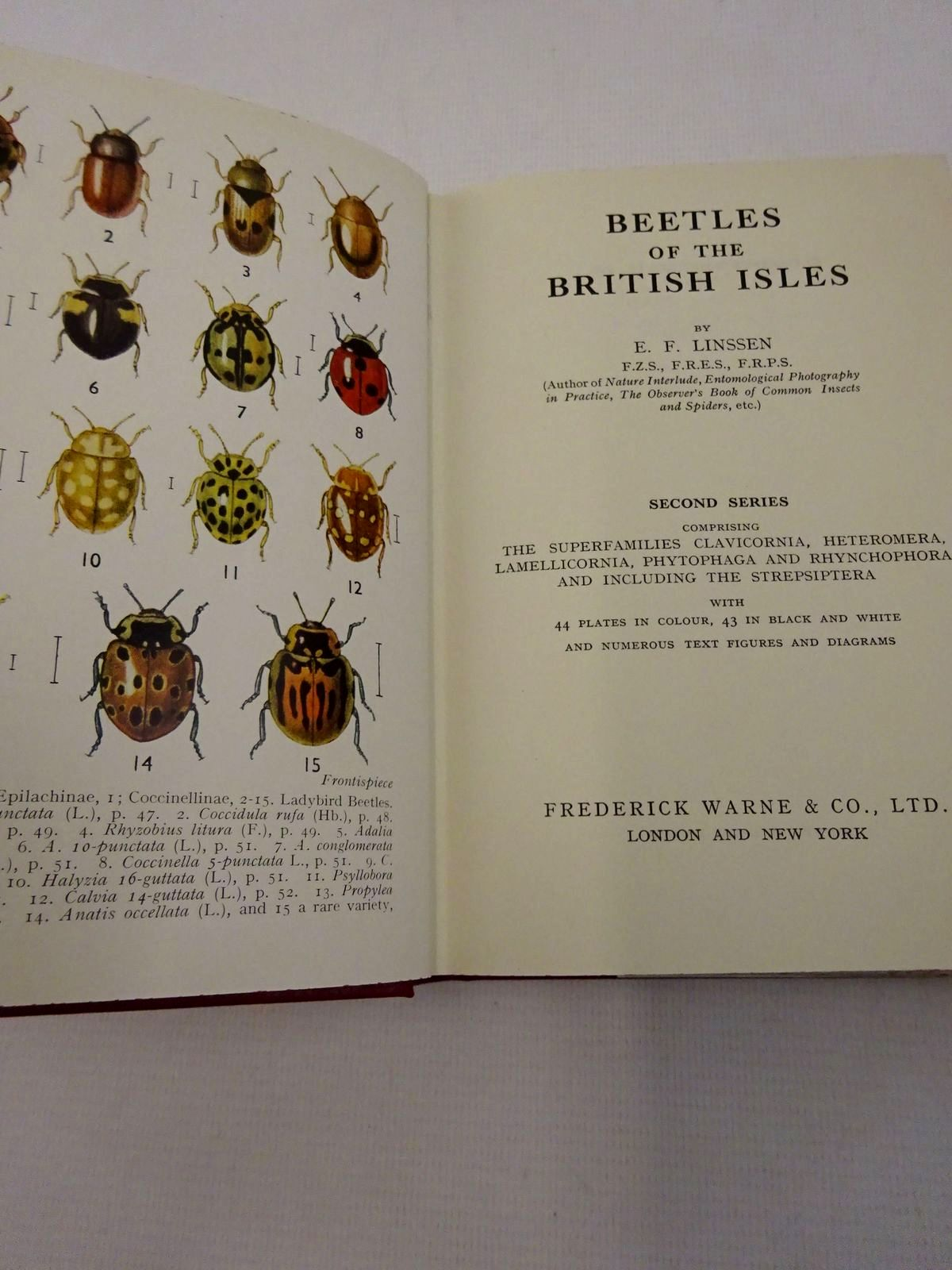 Photo of BEETLES OF THE BRITISH ISLES SECOND SERIES written by Linssen, E.F. published by Frederick Warne & Co Ltd. (STOCK CODE: 1815855)  for sale by Stella & Rose's Books