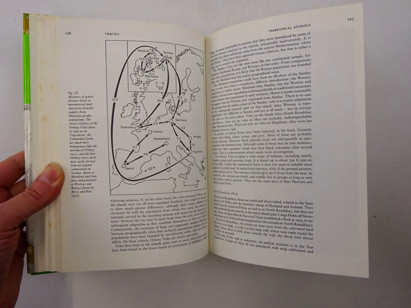 Photo of THE NATURAL HISTORY OF ORKNEY (NN 70) written by Berry, R.J. published by Collins (STOCK CODE: 1816244)  for sale by Stella & Rose's Books