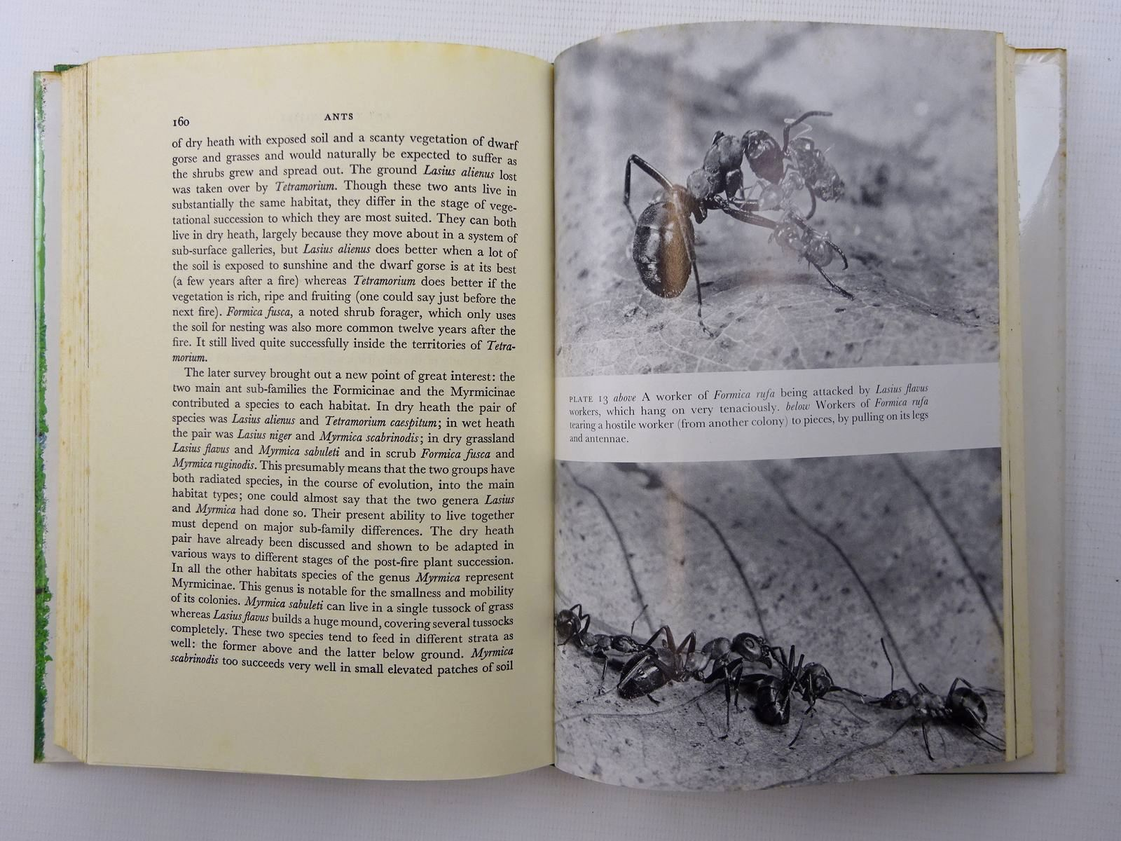 Photo of ANTS (NN 59) written by Brian, M.V. illustrated by Riley, Gordon published by Collins (STOCK CODE: 1816254)  for sale by Stella & Rose's Books