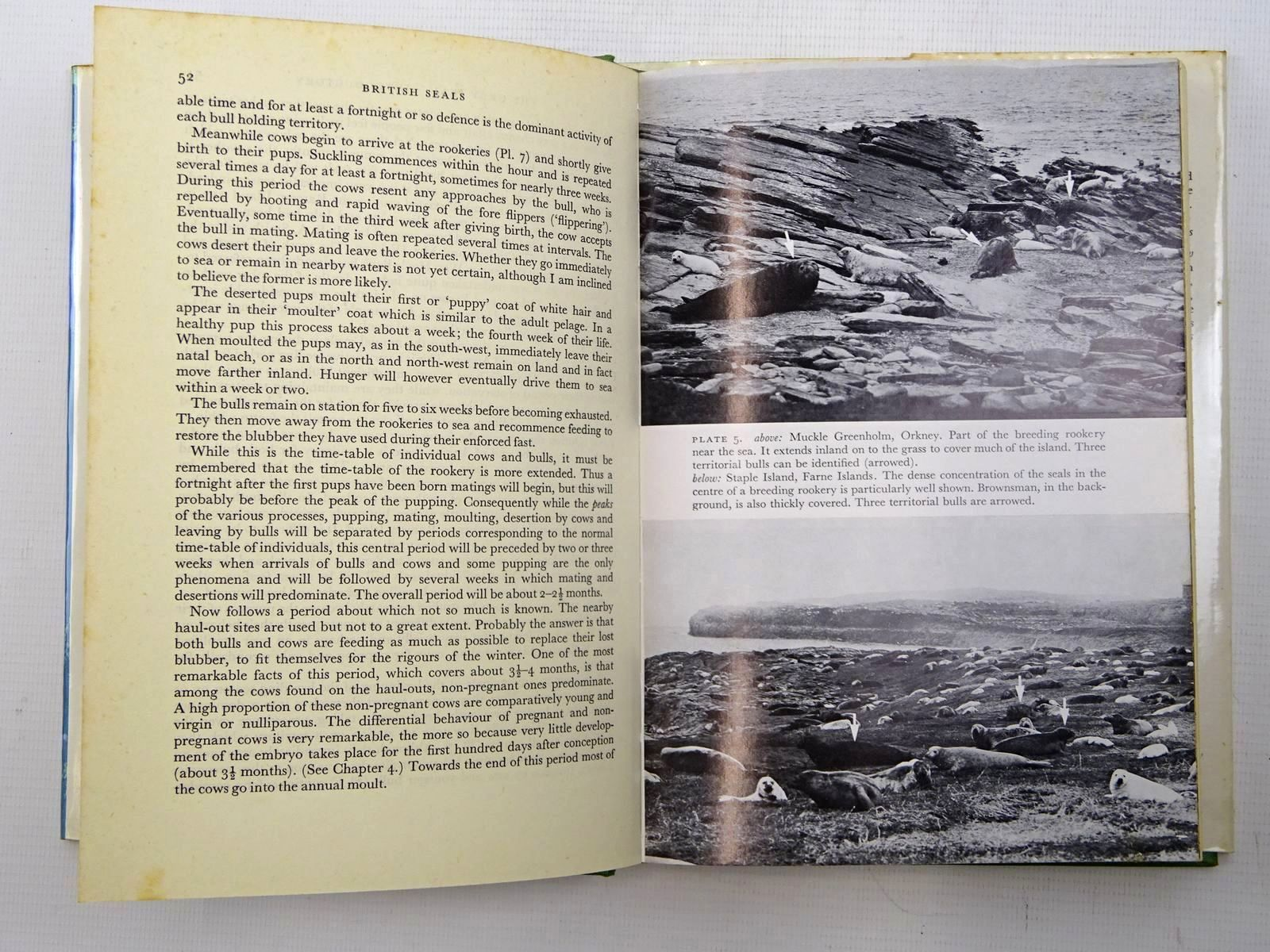 Photo of BRITISH SEALS (NN 57) written by Hewer, H.R. published by Collins (STOCK CODE: 1816255)  for sale by Stella & Rose's Books