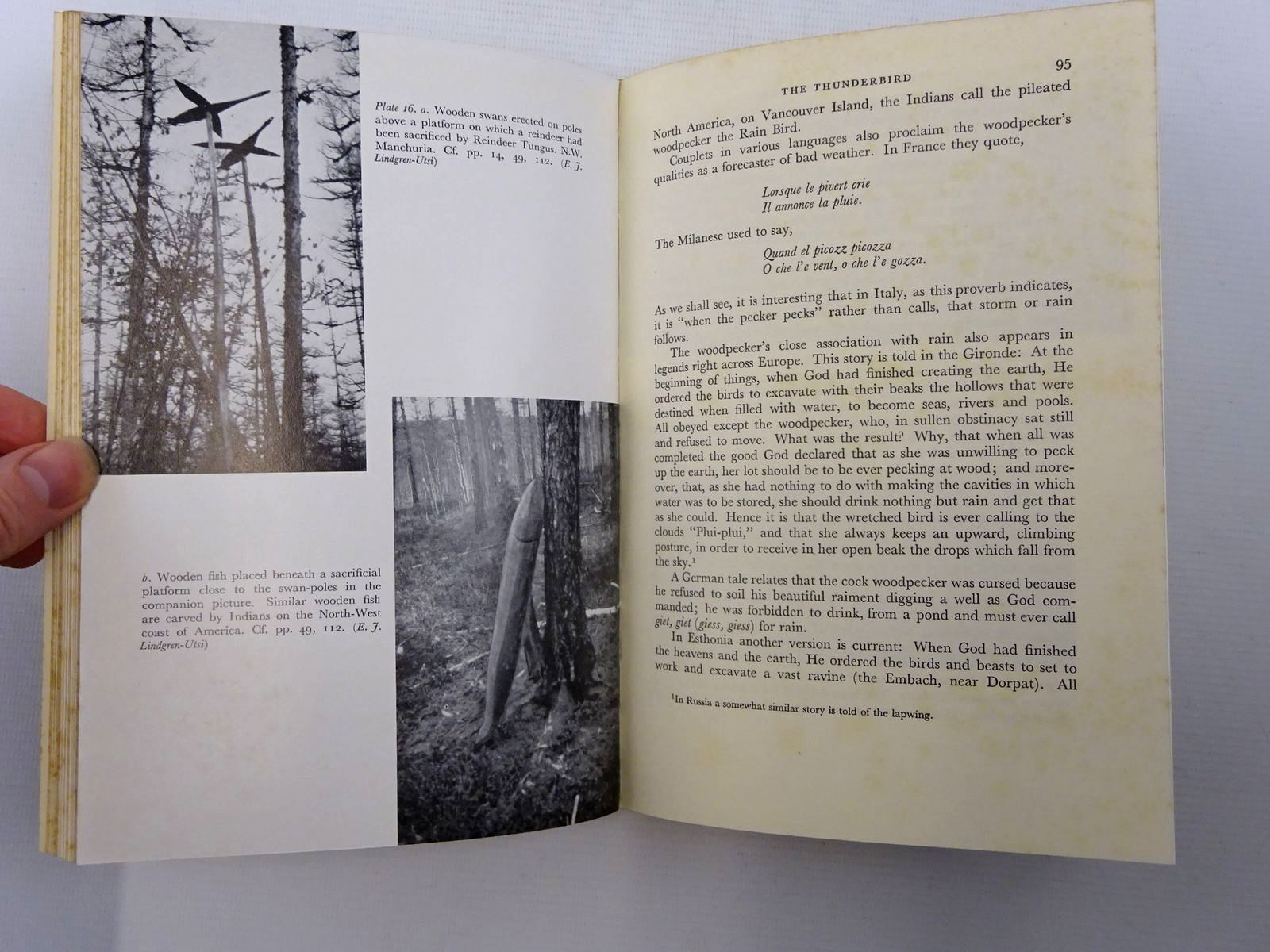 Photo of THE FOLKLORE OF BIRDS (NN 39) written by Armstrong, Edward A. published by Collins (STOCK CODE: 1816259)  for sale by Stella & Rose's Books