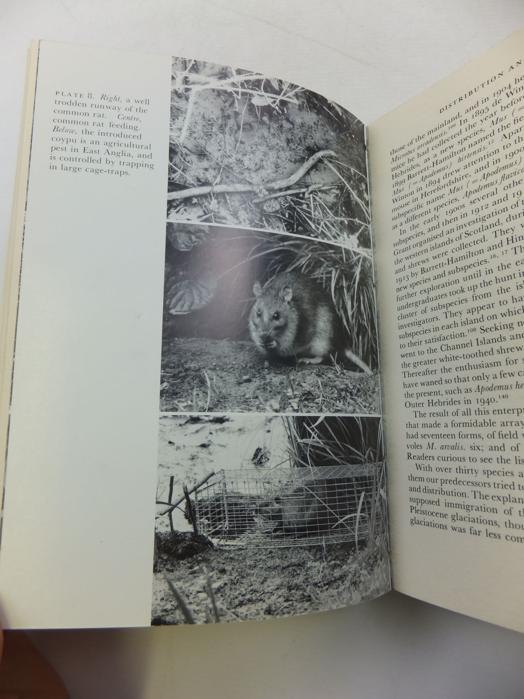 Photo of MAMMALS IN THE BRITISH ISLES (NN 68) written by Matthews, L. Harrison published by Collins (STOCK CODE: 2110330)  for sale by Stella & Rose's Books