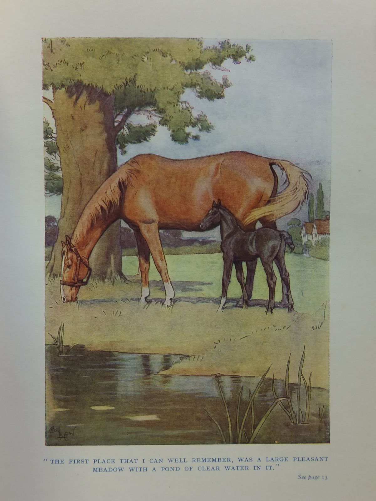 Photo of BLACK BEAUTY written by Sewell, Anna illustrated by Aldin, Cecil published by Jarrolds (STOCK CODE: 2113057)  for sale by Stella & Rose's Books