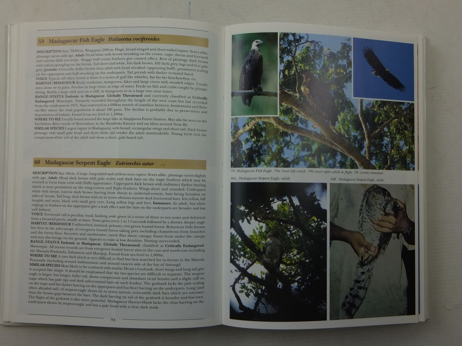 Photo of BIRDS OF MADAGASCAR A PHOTOGRAPHIC GUIDE written by Morris, Pete<br />Hawkins, Frank published by Pica Press (STOCK CODE: 2113827)  for sale by Stella & Rose's Books