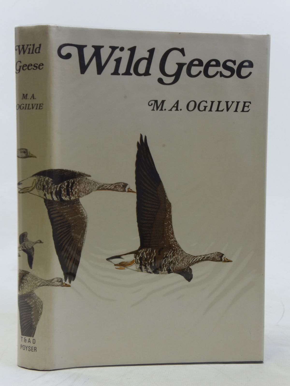 Photo of WILD GEESE
