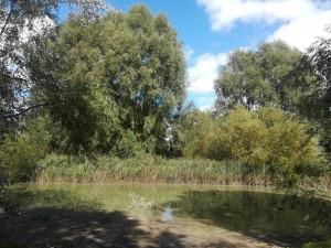Bathurst Park in Lyndey