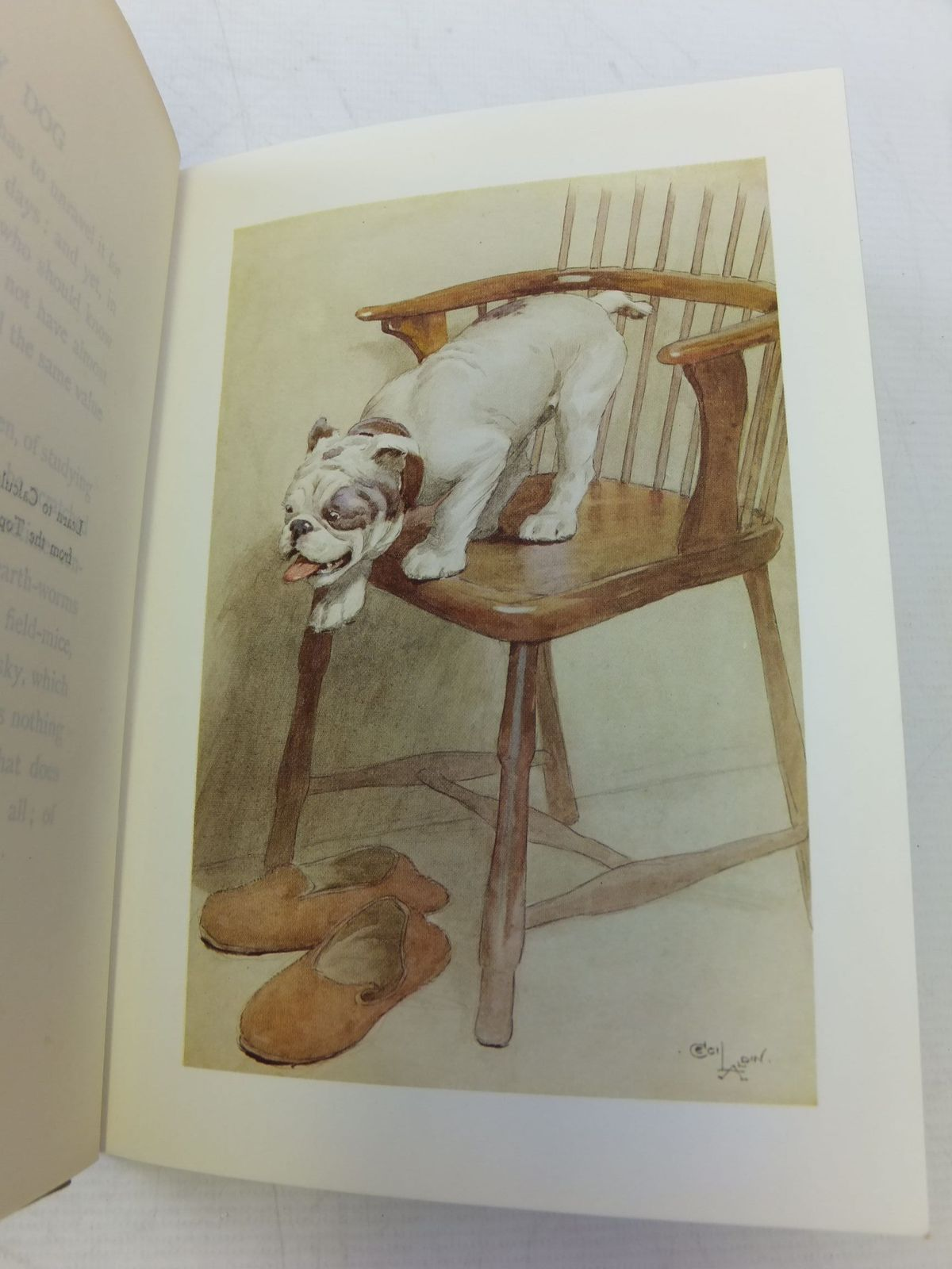 Photo of MY DOG written by Maeterlinck, Maurice illustrated by Aldin, Cecil published by George Allen and Co. Ltd. (STOCK CODE: 1109156)  for sale by Stella & Rose's Books