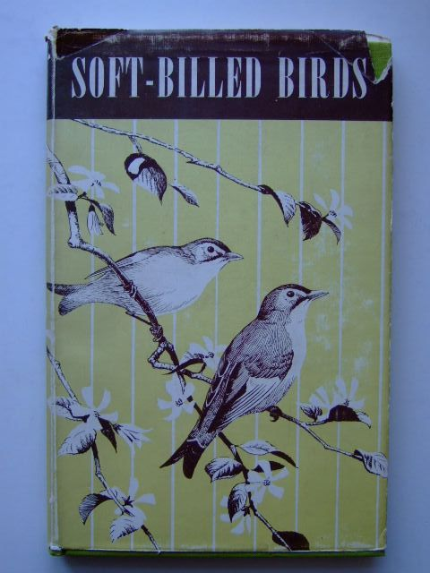 Photo of SOFT-BILLED BIRDS- Stock Number: 1204047
