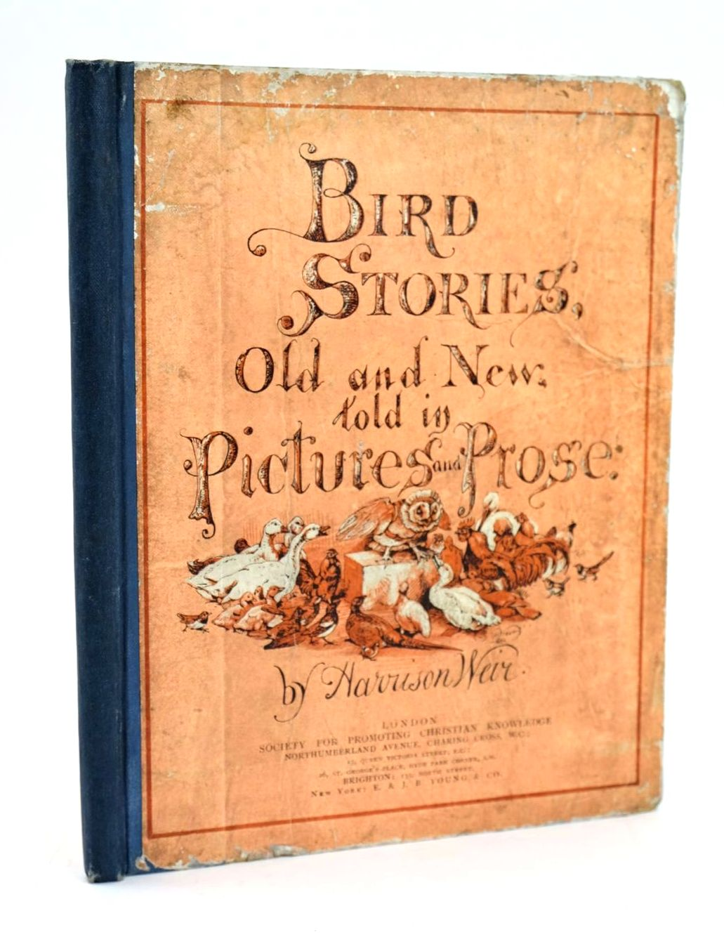 Photo of BIRD STORIES OLD AND NEW, TOLD IN PICTURES AND PROSE- Stock Number: 1319206