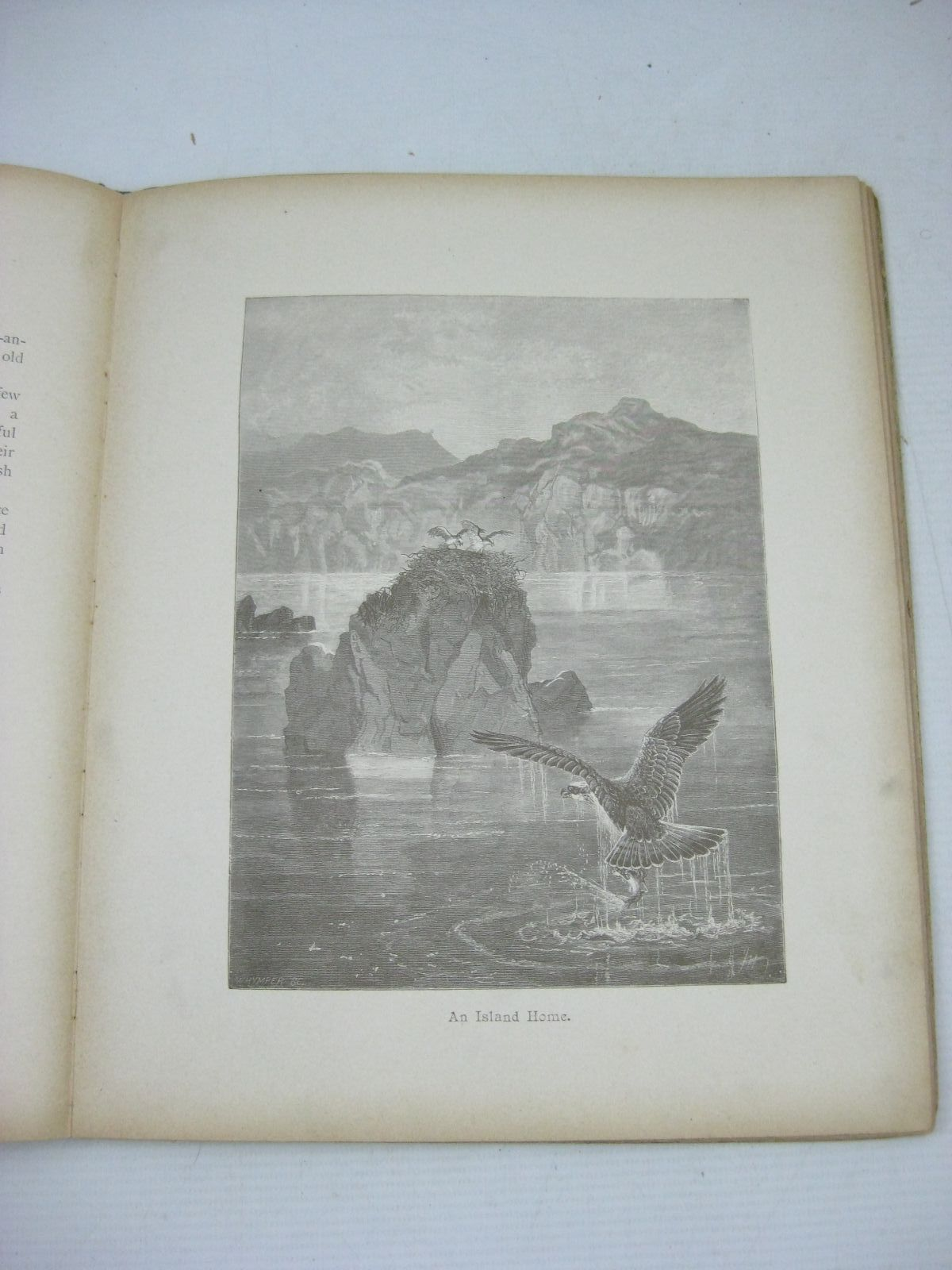 Photo of THE HURDY GURDY written by Hoyer, M.A. Boyle, Mary Weedon, L.L. et al,  illustrated by Foster, W. Maguire, Helena et al.,  published by Ernest Nister, E.P. Dutton & Co. (STOCK CODE: 1505816)  for sale by Stella & Rose's Books
