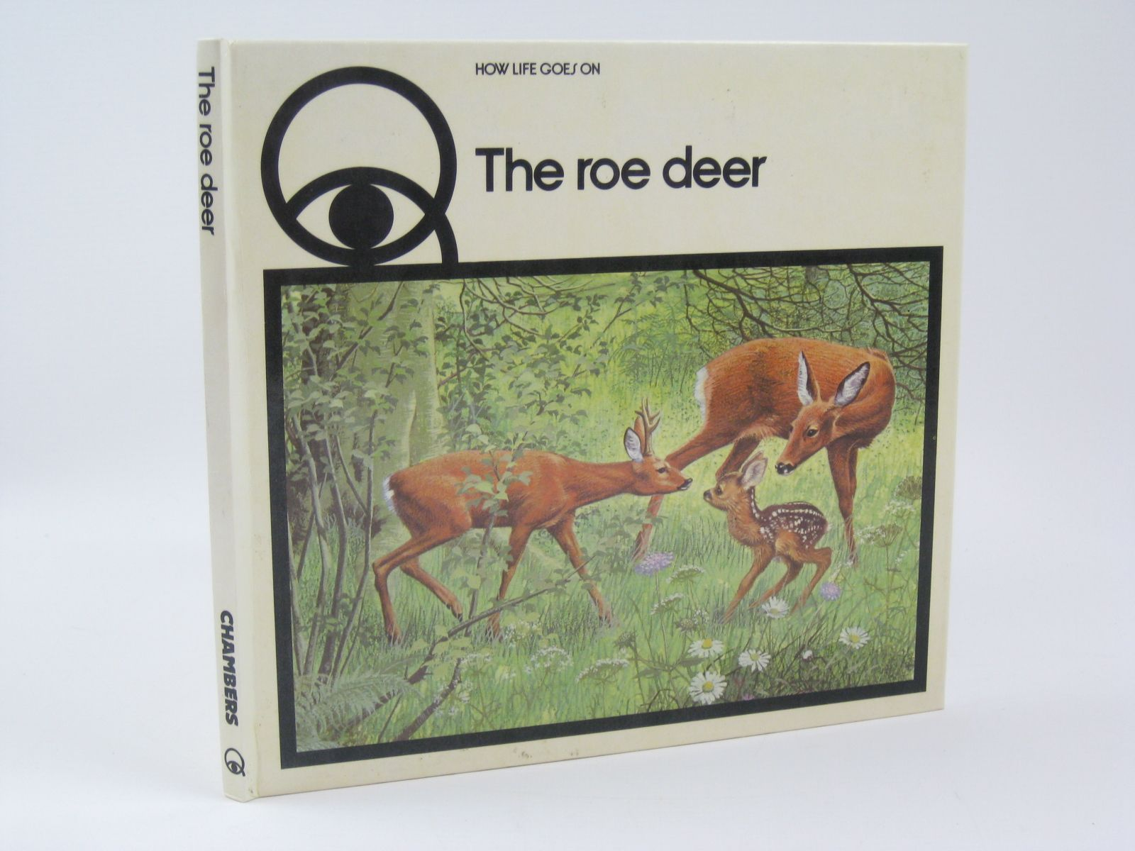 Photo of HOW LIFE GOES ON THE ROE DEER- Stock Number: 1506708