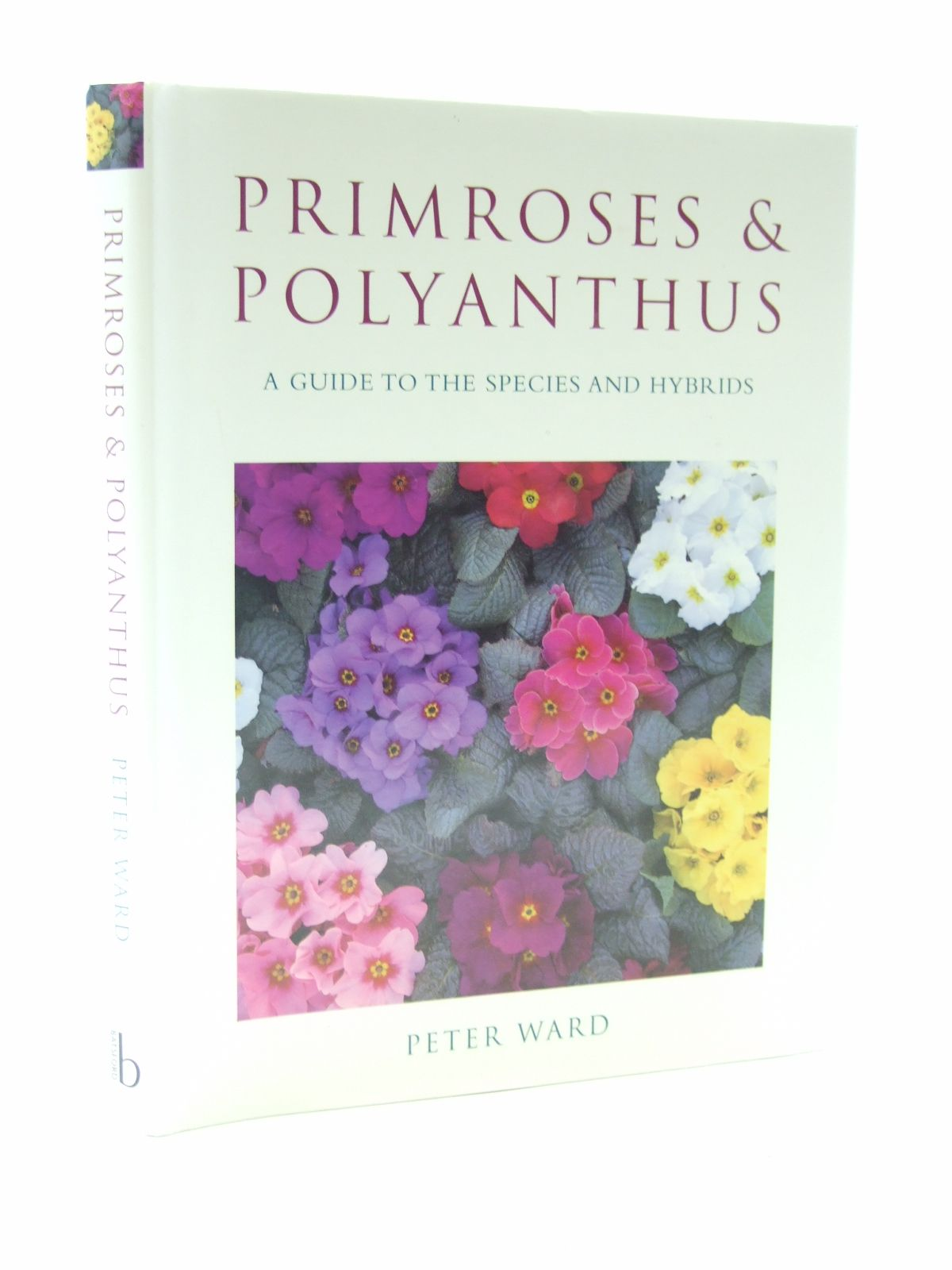 Photo of PRIMROSES AND POLYANTHUS- Stock Number: 1603825