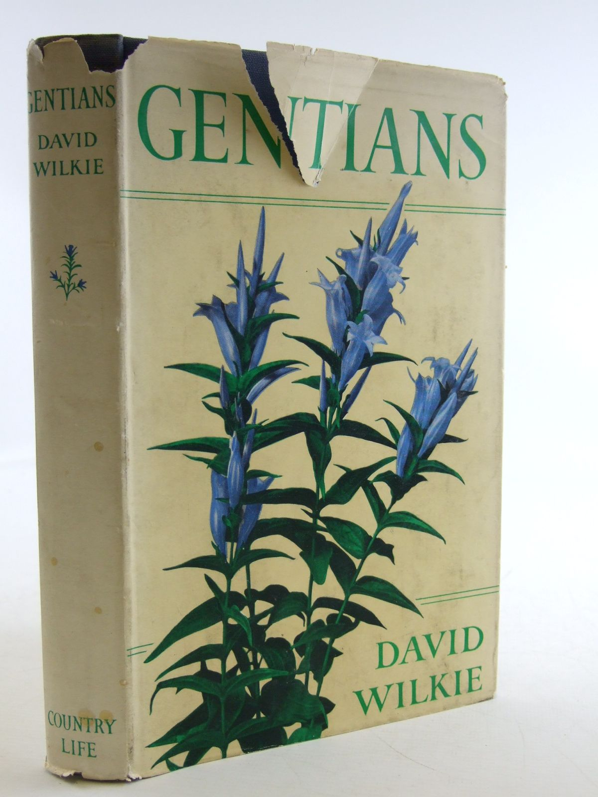 Photo of GENTIANS written by Wilkie, David illustrated by Nash, John published by Country Life Limited (STOCK CODE: 1603831)  for sale by Stella & Rose's Books