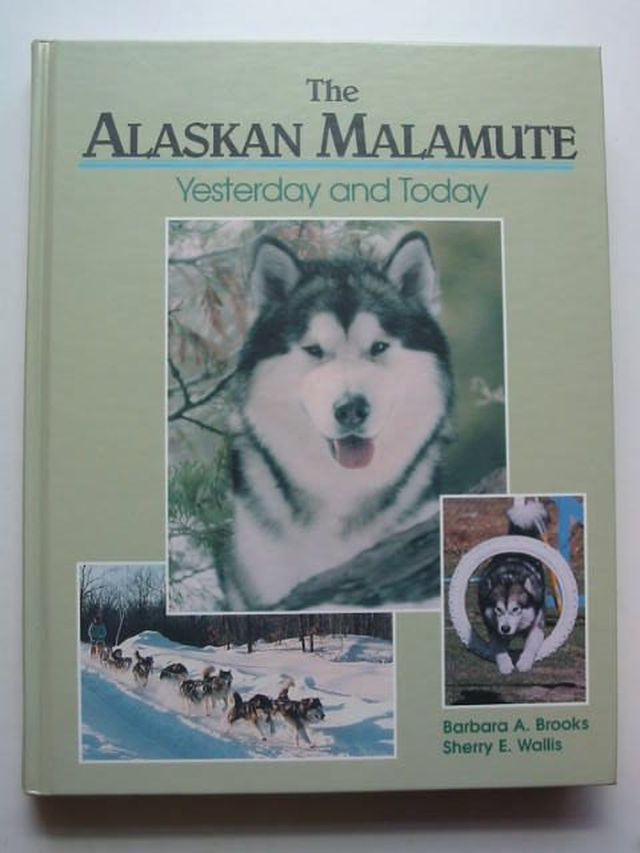 Photo of THE ALASKAN MALAMUTE- Stock Number: 1701042