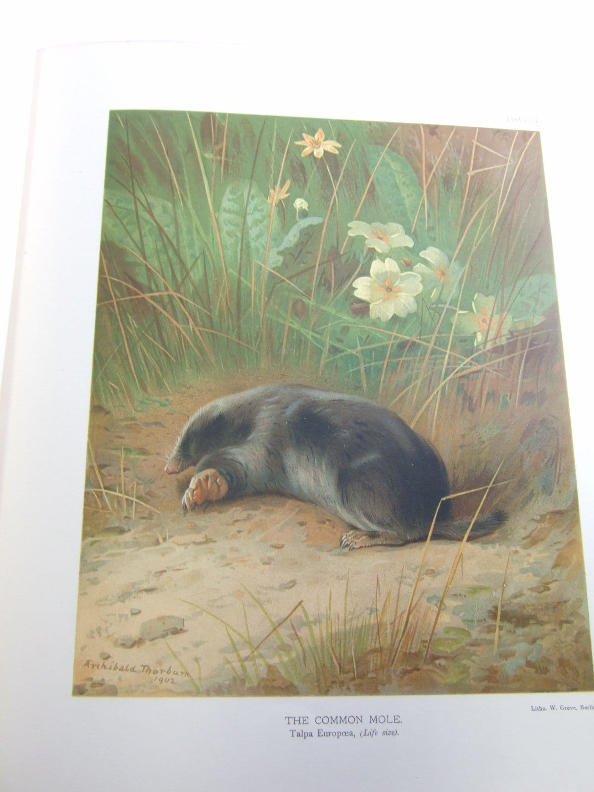 Photo of THE MAMMALS OF GREAT BRITAIN AND IRELAND written by Millais, J.G. illustrated by Millais, J.G.