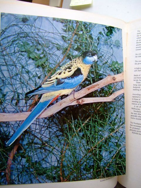 Photo of AUSTRALIAN PARROTS written by Forshaw, Joseph M. illustrated by Yrizarry, John C. published by Lansdowne Press (STOCK CODE: 1803459)  for sale by Stella & Rose's Books