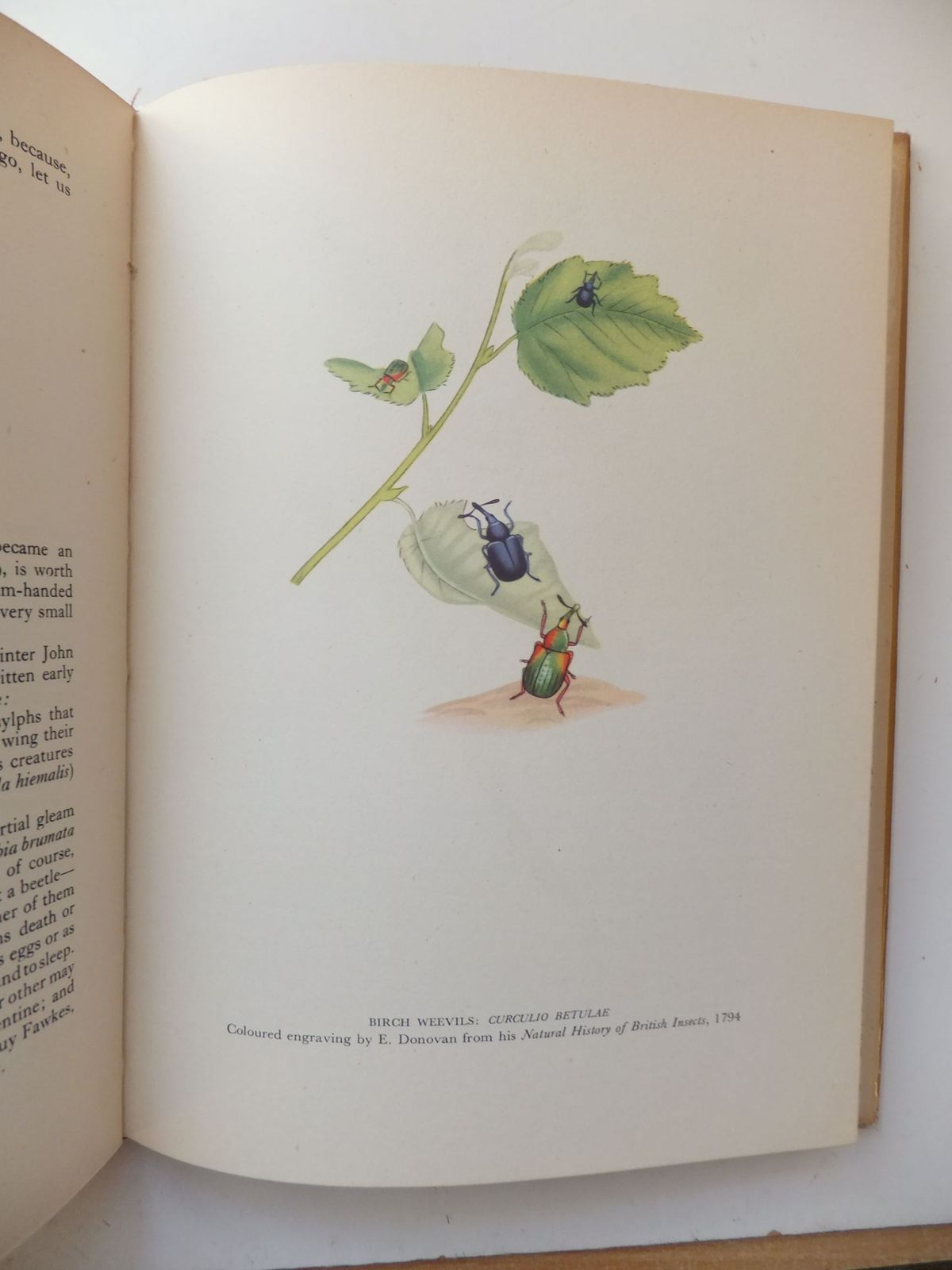 Photo of INSECT LIFE IN BRITAIN (BIP 94) written by Taylor, Geoffrey published by Collins (STOCK CODE: 1806120)  for sale by Stella & Rose's Books