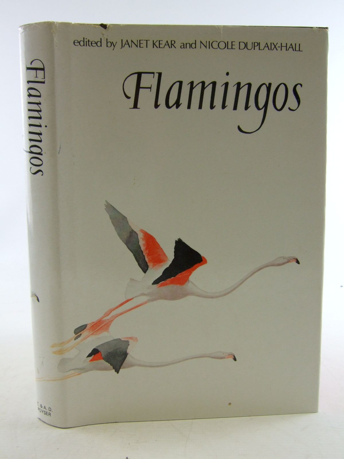 Photo of FLAMINGOS- Stock Number: 1806315