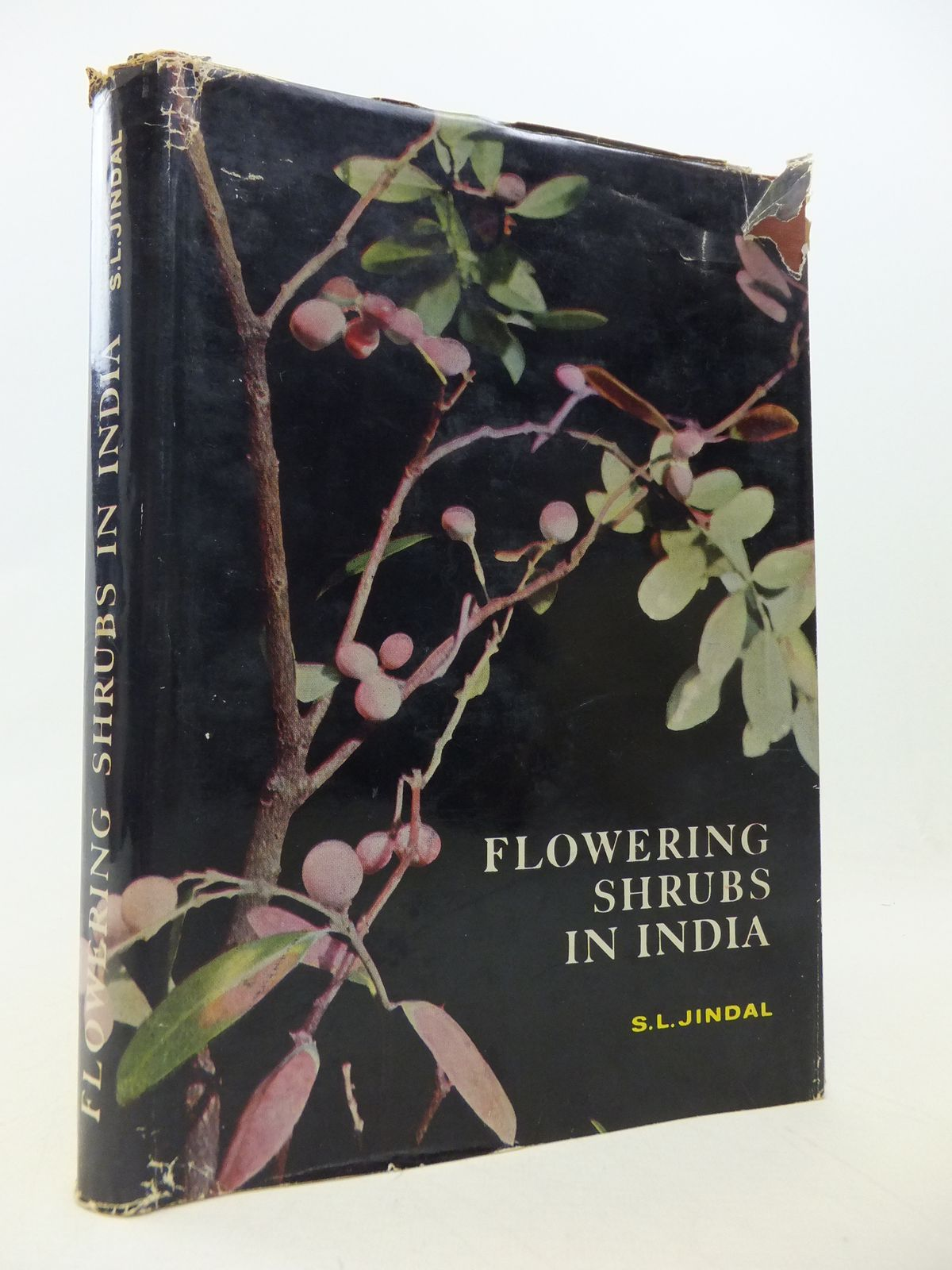 Photo of FLOWERING SHRUBS IN INDIA- Stock Number: 1809035