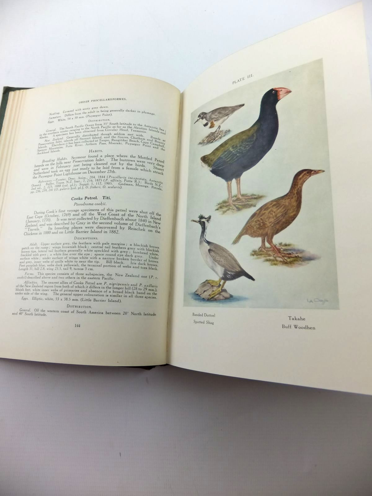 Photo of NEW ZEALAND BIRDS written by Oliver W.R.B., published by Fine Arts (n.Z.) Ltd. (STOCK CODE: 1814266)  for sale by Stella & Rose's Books