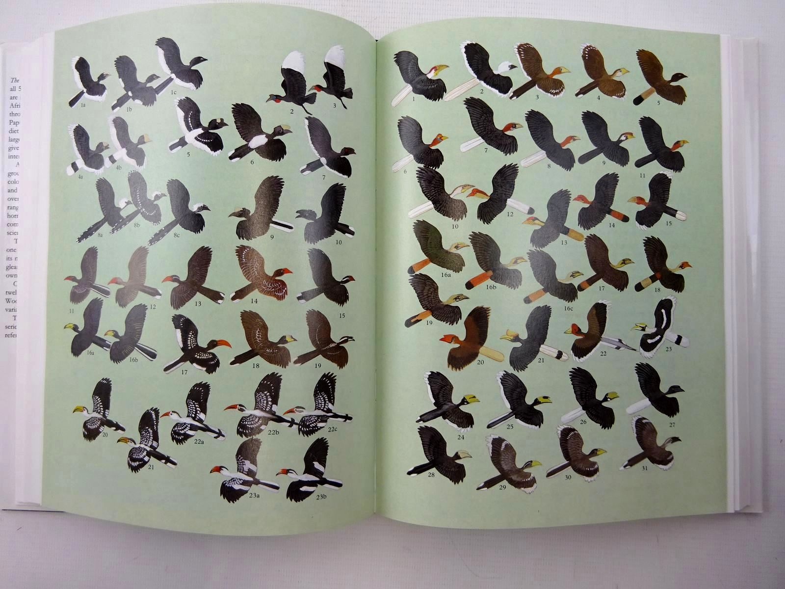 Photo of THE HORNBILLS: BUCEROTIFORMES (BIRD FAMILIES OF THE WORLD SERIES) written by Kemp, Alan illustrated by Woodcock, Martin published by Oxford University Press (STOCK CODE: 1815974)  for sale by Stella & Rose's Books