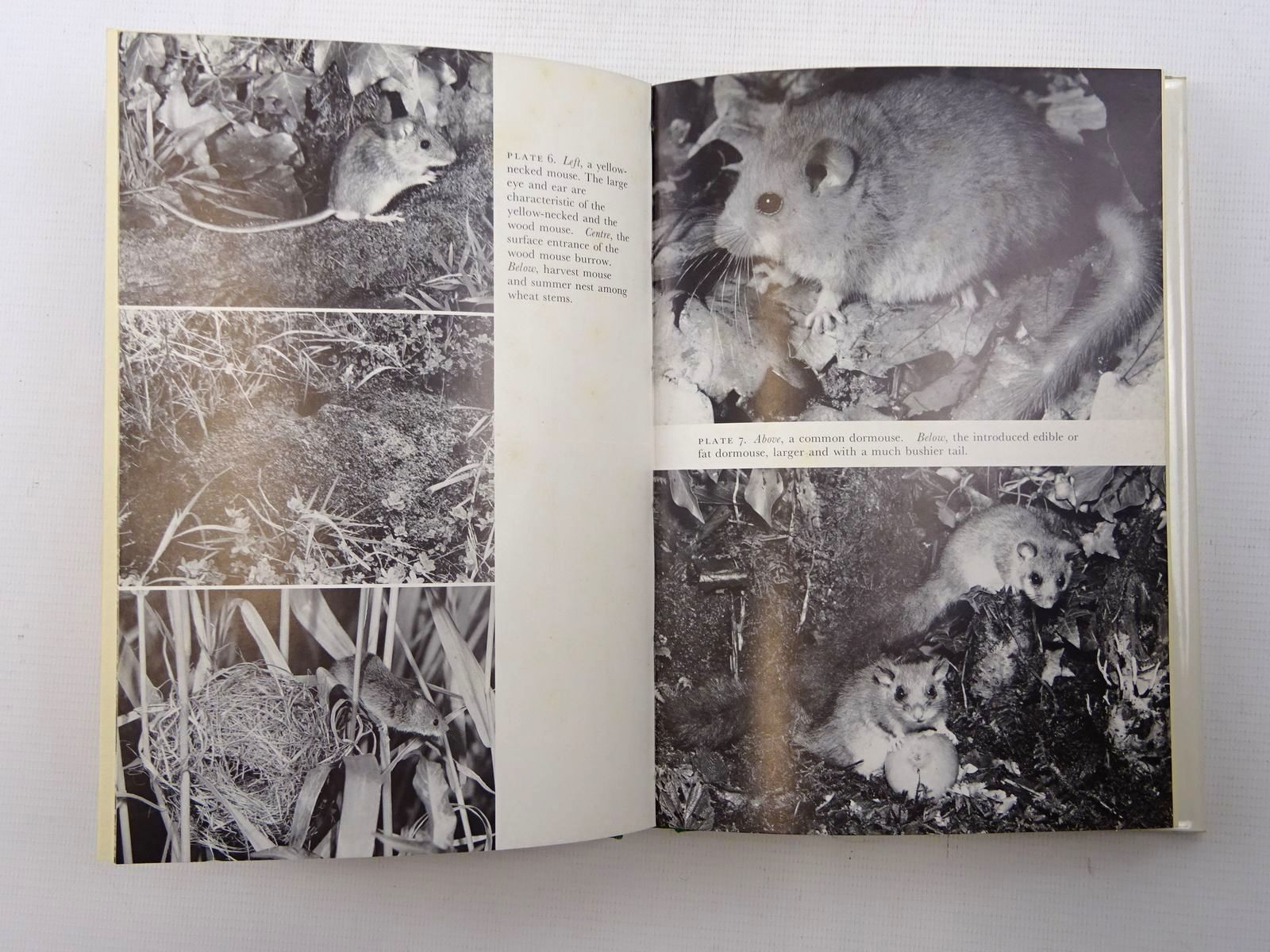 Photo of MAMMALS IN THE BRITISH ISLES (NN 68) written by Matthews, L. Harrison published by Collins (STOCK CODE: 1816246)  for sale by Stella & Rose's Books