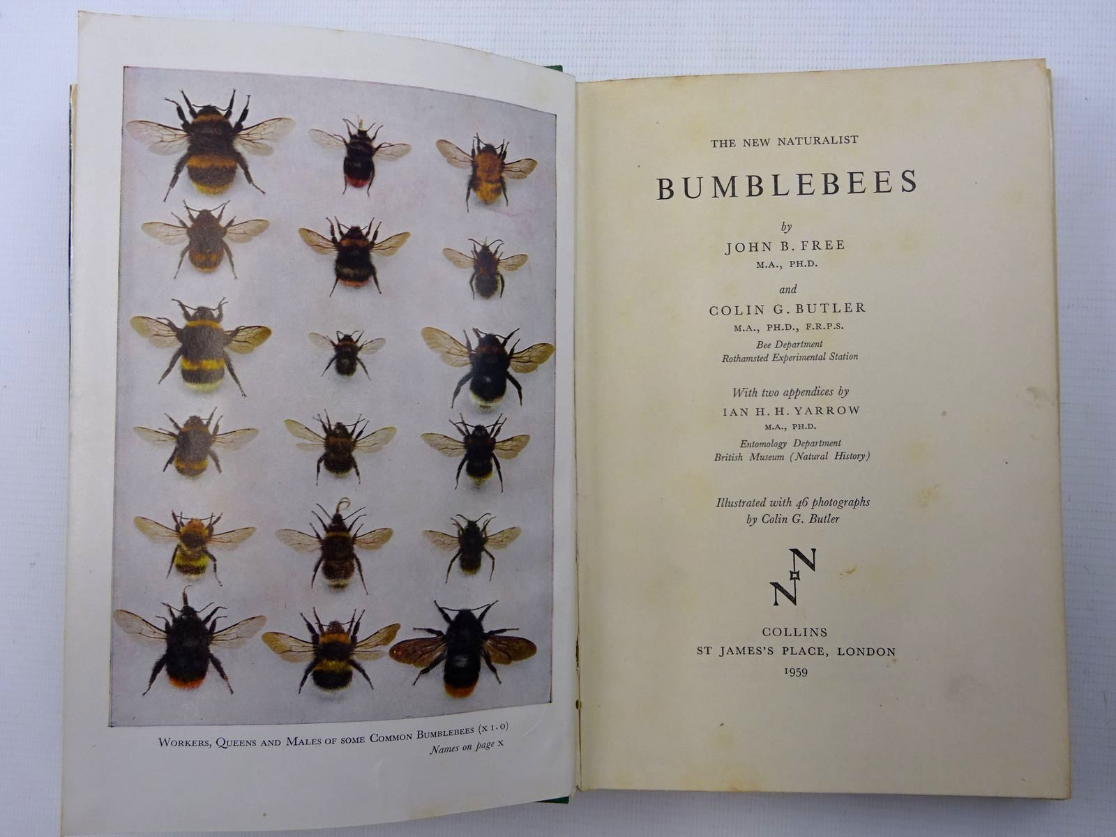 Photo of BUMBLEBEES (NN 40) written by Free, John B.