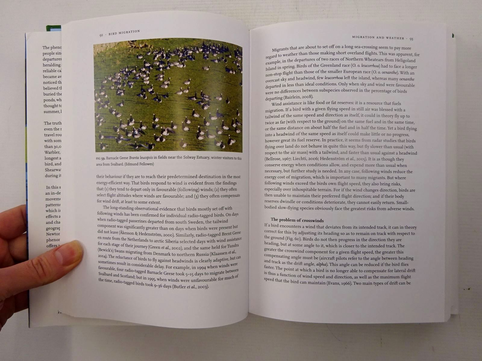 Photo of BIRD MIGRATION (NN 113) written by Newton, Ian published by Collins (STOCK CODE: 1816261)  for sale by Stella & Rose's Books