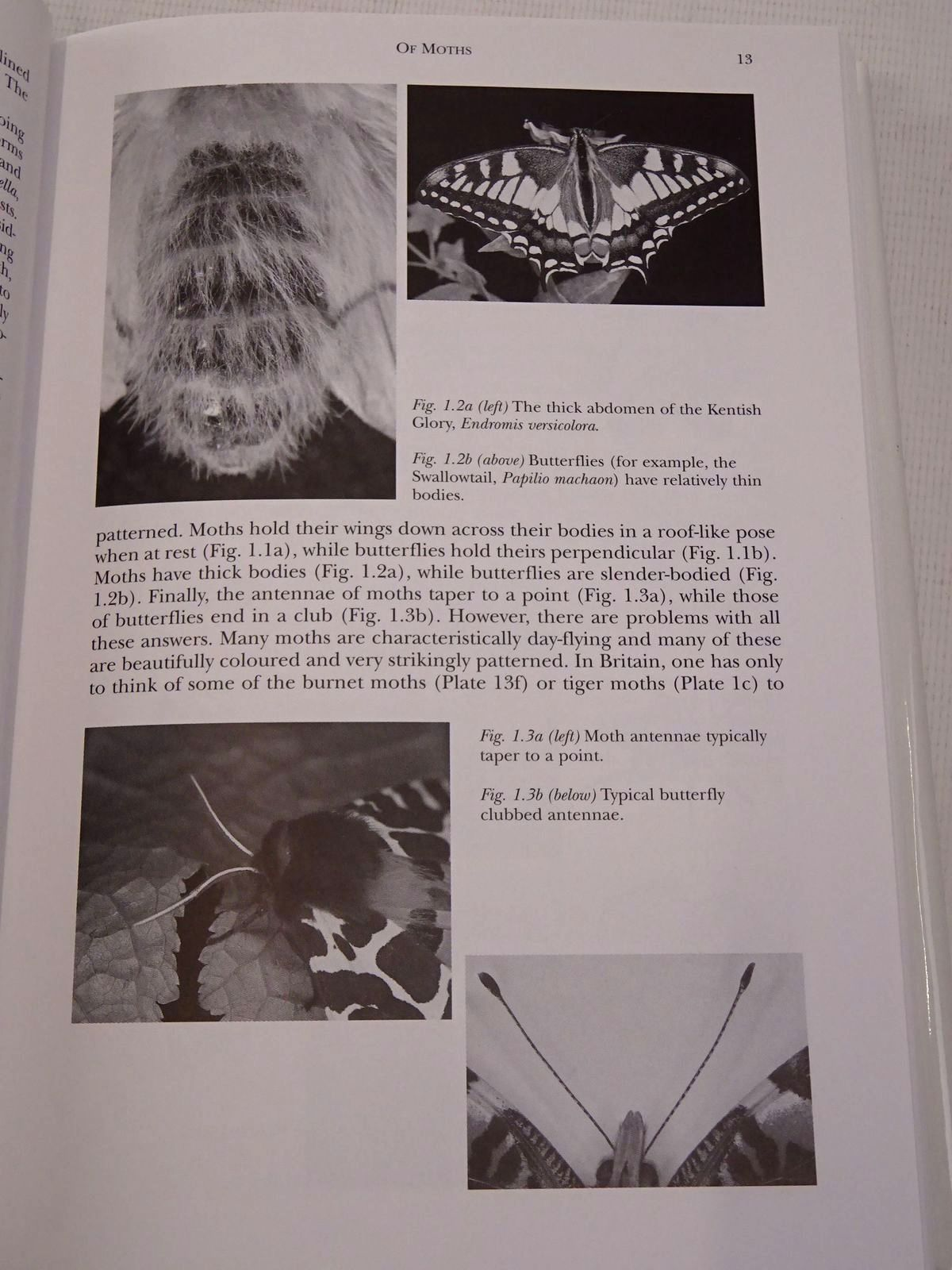 Photo of MOTHS (NN 90) written by Majerus, Michael E.N. published by Harper Collins (STOCK CODE: 1817299)  for sale by Stella & Rose's Books