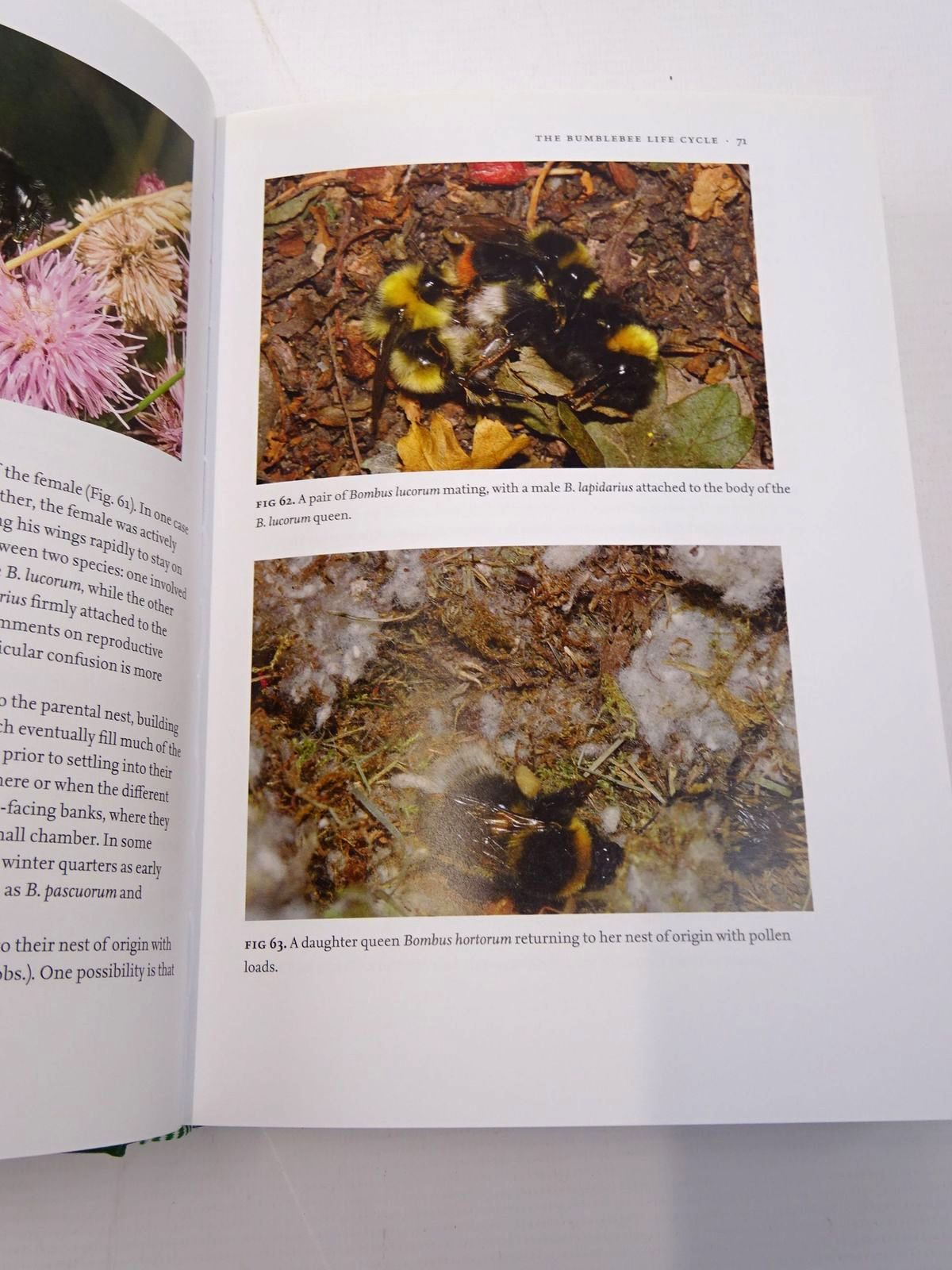Photo of BUMBLEBEES (NN 98) written by Benton, Ted published by Collins (STOCK CODE: 1817564)  for sale by Stella & Rose's Books
