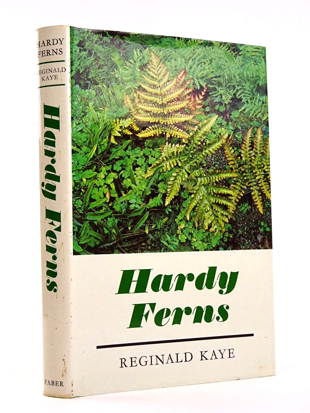 Photo of HARDY FERNS- Stock Number: 1818225