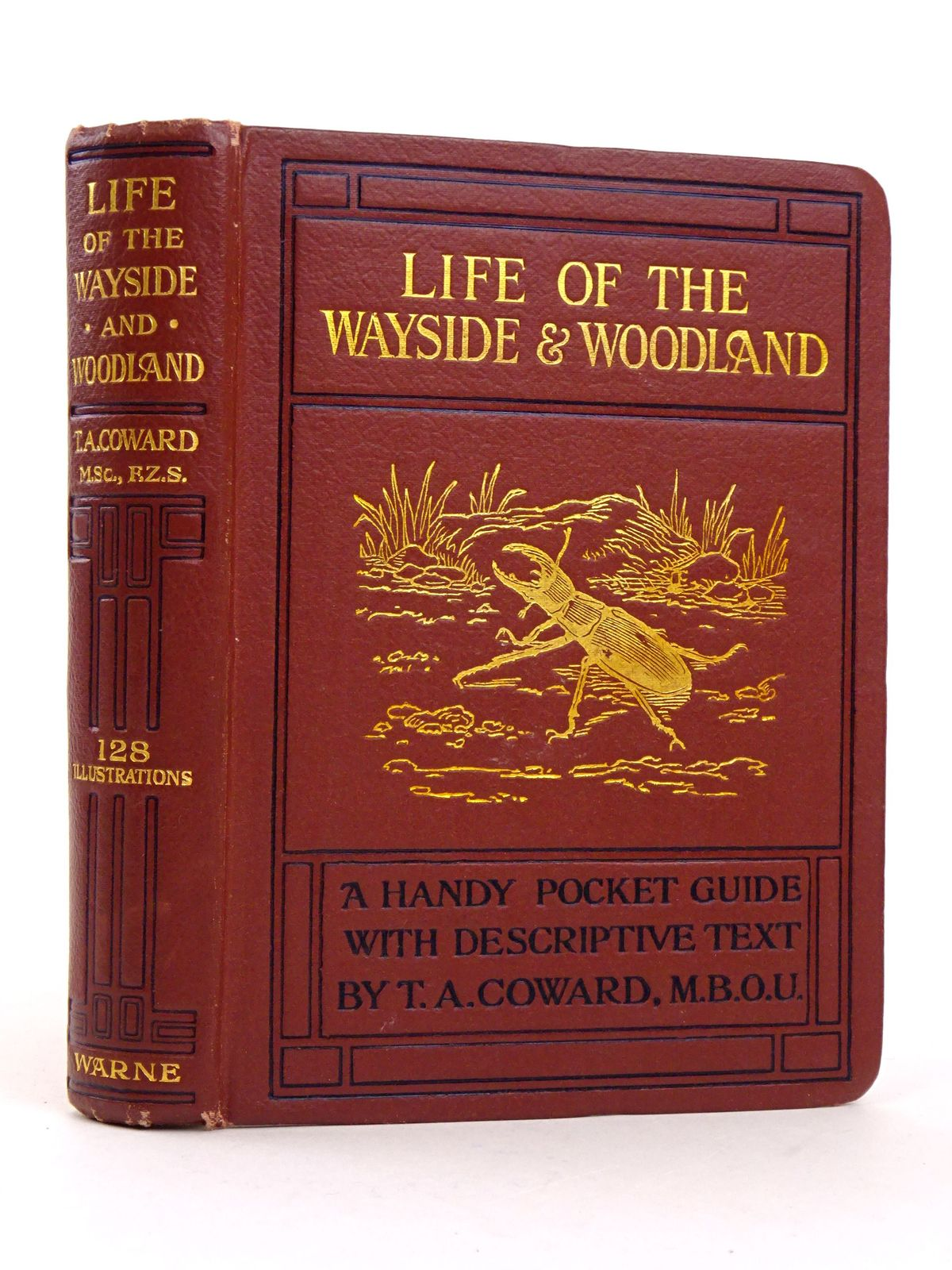 Photo of LIFE OF THE WAYSIDE & WOODLAND- Stock Number: 1818322