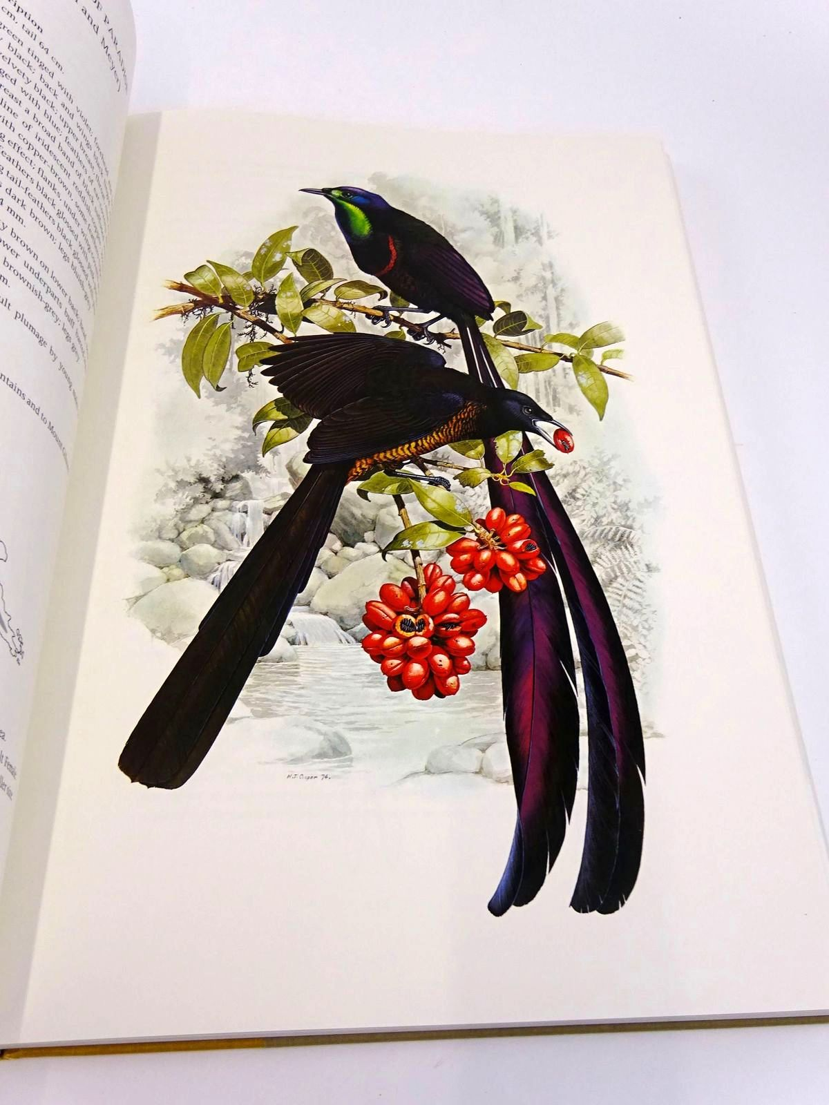 Photo of THE BIRDS OF PARADISE AND BOWER BIRDS written by Cooper, William T.