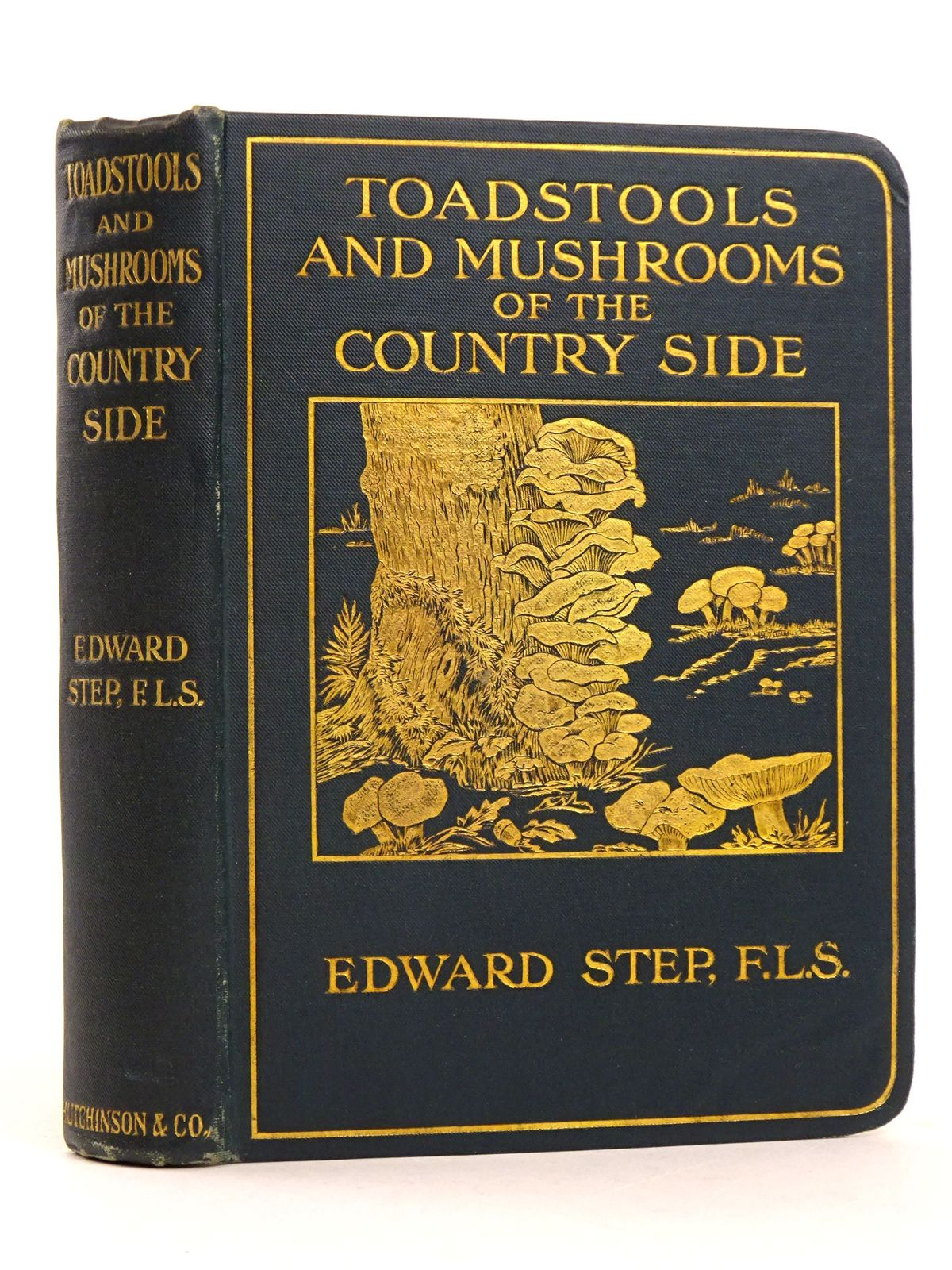 Photo of TOADSTOOLS AND MUSHROOMS OF THE COUNTRYSIDE- Stock Number: 1818395