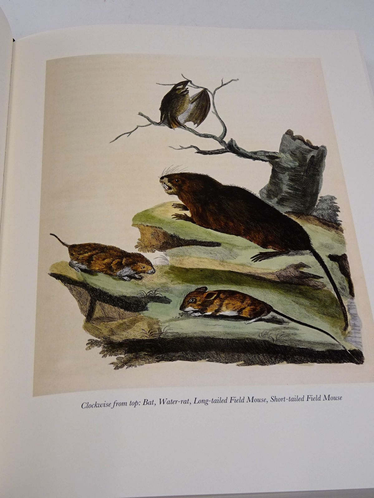 Photo of THE NATURAL HISTORY OF SELBORNE written by White, Gilbert Thomas, Keith published by Folio Society (STOCK CODE: 1818659)  for sale by Stella & Rose's Books