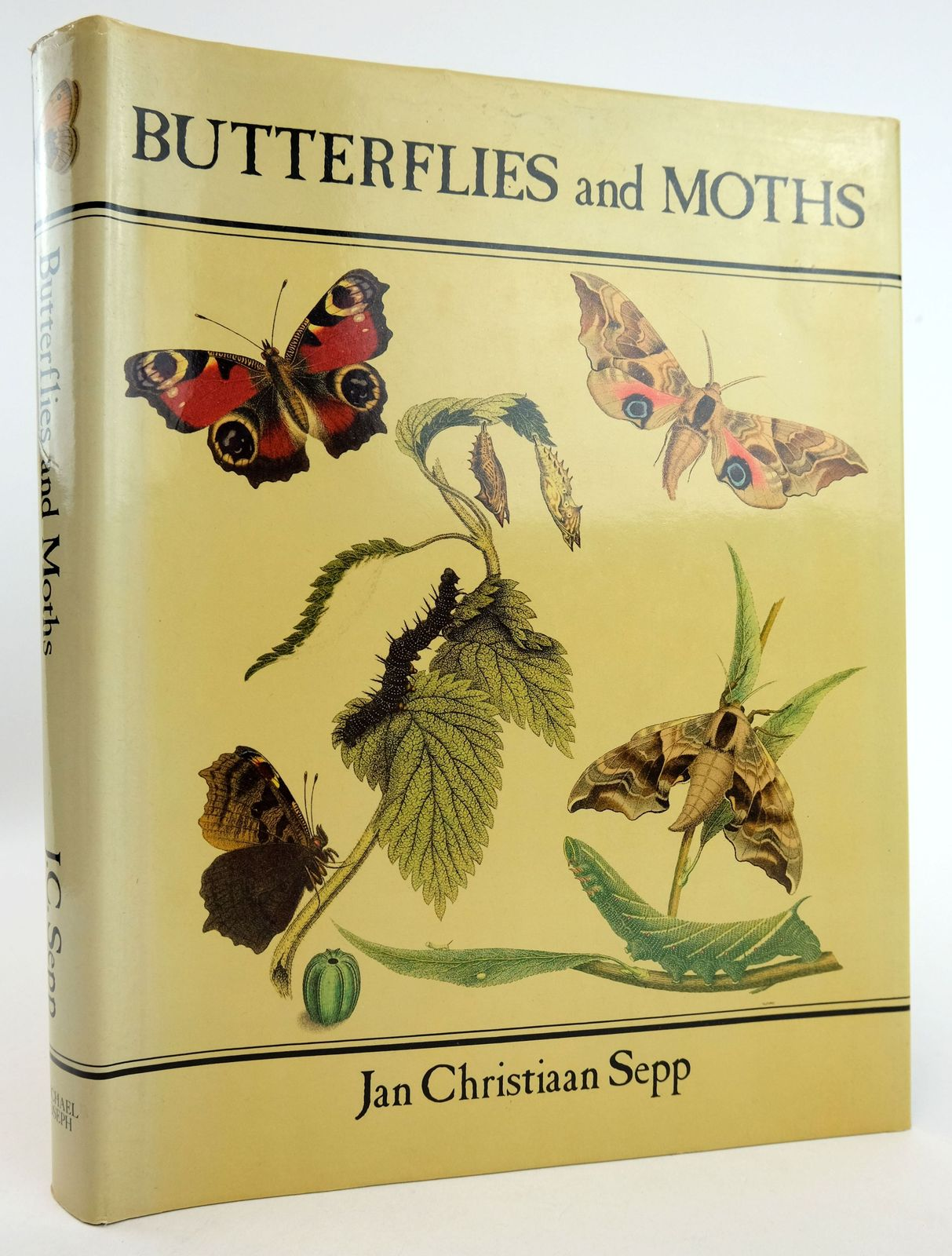 Photo of BUTTERFLIES AND MOTHS- Stock Number: 1819072