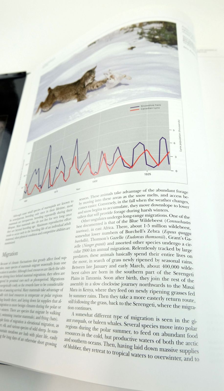 Photo of HANDBOOK OF THE MAMMALS OF THE WORLD 1. CARNIVORES written by Wilson, Don E. Mittermeier, Russell A. et al, published by Lynx Edicions (STOCK CODE: 1820163)  for sale by Stella & Rose's Books