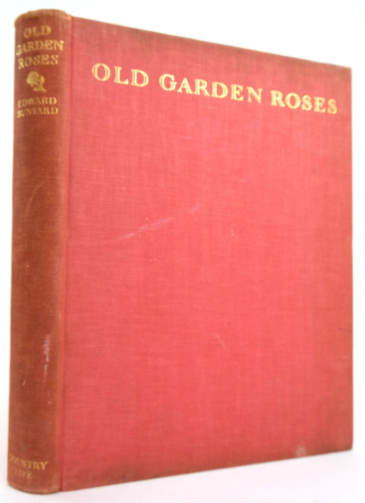 Photo of OLD GARDEN ROSES- Stock Number: 1820175