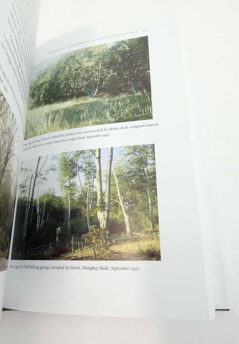 Photo of WOODLANDS (NN 100) written by Rackham, Oliver published by Collins (STOCK CODE: 1821618)  for sale by Stella & Rose's Books