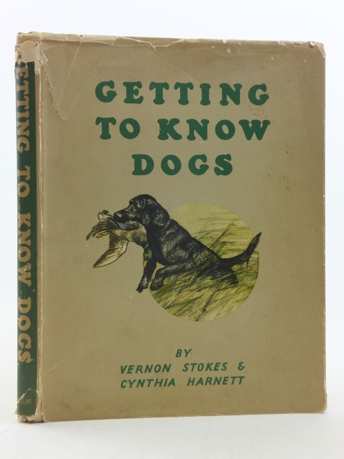 Photo of GETTING TO KNOW DOGS written by Harnett, Cynthia illustrated by Stokes, Vernon published by Collins (STOCK CODE: 2113775)  for sale by Stella & Rose's Books