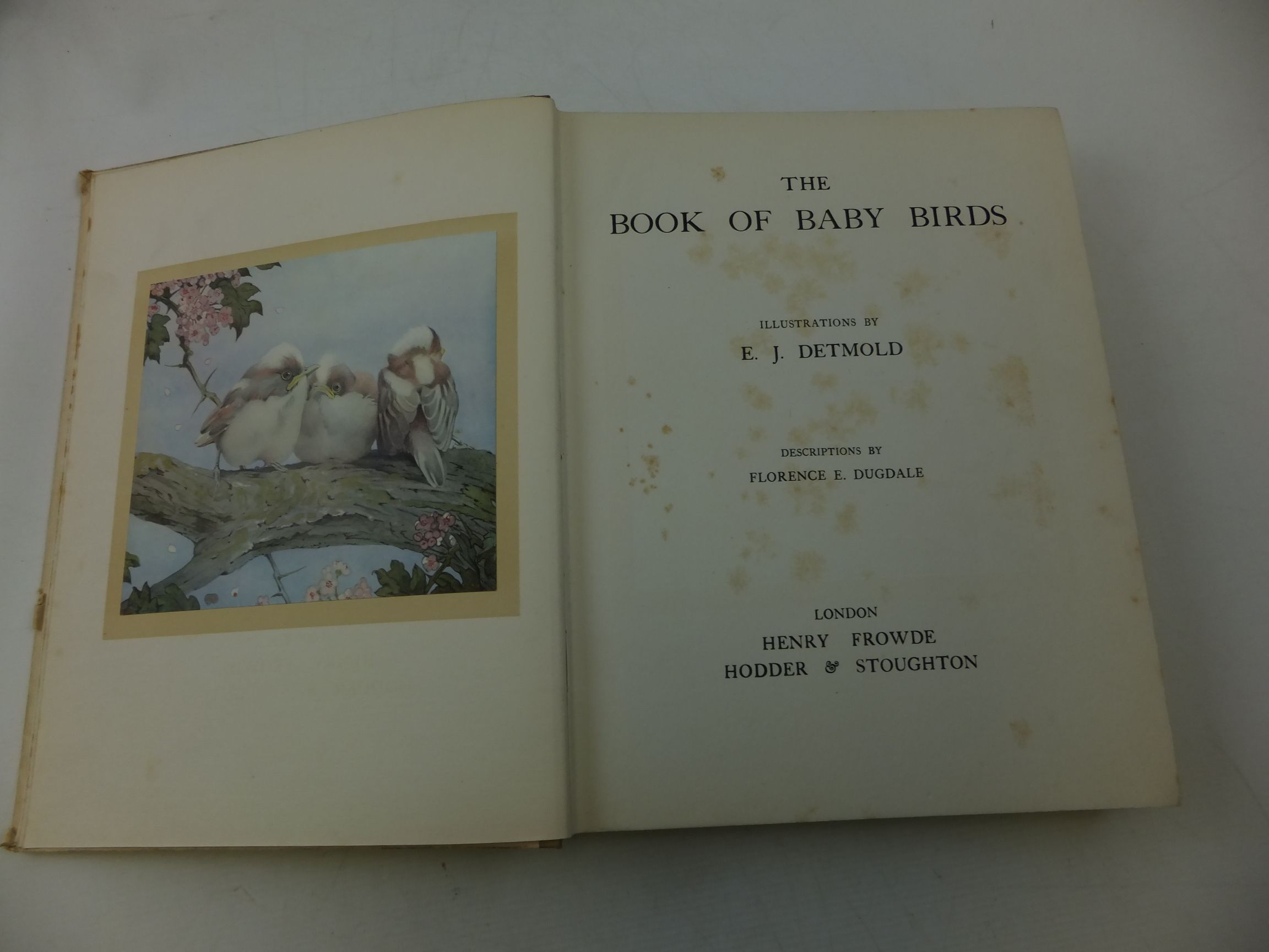Photo of THE BOOK OF BABY BIRDS written by Dugdale, Florence E. illustrated by Detmold, Edward J. published by Henry Frowde, Hodder & Stoughton (STOCK CODE: 2114160)  for sale by Stella & Rose's Books
